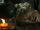 503 Dwarf 1 Oppo head.jpg