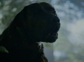 Dogs-Portal