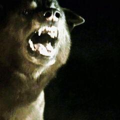 Cão Felpudo assusta <a href=