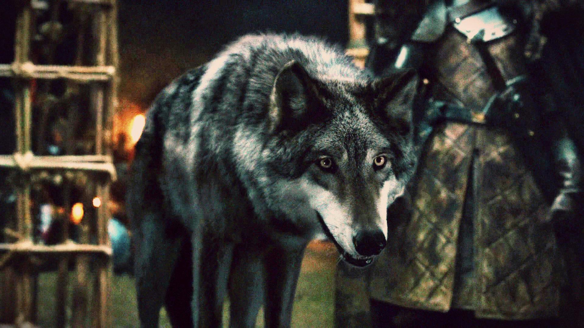 Got Red Wedding   Grey Wind Game Of Thrones Wiki Fandom Powered By Wikia