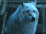 Geist (Schattenwolf)