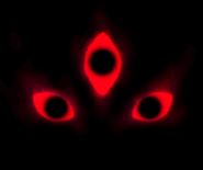 2015-01-24 163345
