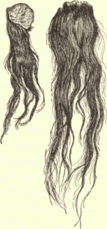Human scalp