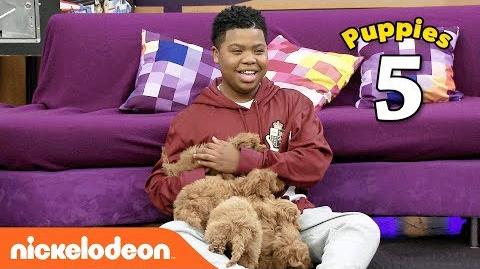 The Cute Puppy Challenge 🐶 w Benjamin Flores Jr. (AKA Luckiest Kid Ever) Game Shakers Nick