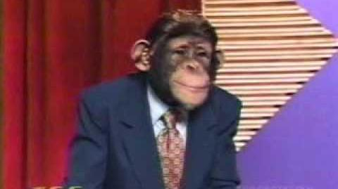 "The Chimp Channel ""Wheel of Fortune"""