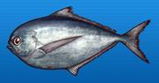 Pacific pomfret