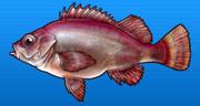 Stingfish