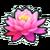 Pink lotus leaf