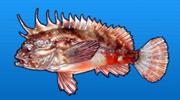Redfin velvetfish