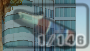 Molotov icono