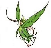 Florresum