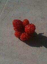Strawberry Catfacing