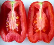 Tomato Hollow Fruit