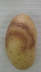 Potato Necrotic Ringspot