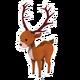 Deer Elk