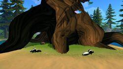 Forest Giant Tree Skunks