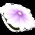 Purple Flower Glider