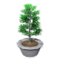 Birch Bonsai Tree