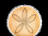 Sand Dollar