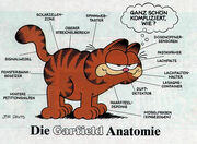 Garfields anatomy German
