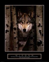 Wisdom-gray-wolf