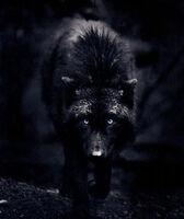 Ingrid-wolf