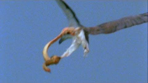 World's Deadliest - Eagle vs. Toxic Snake