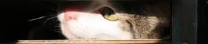 Io-cat