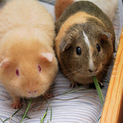 Hampsters