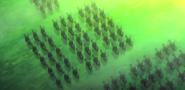 Alnus imperials