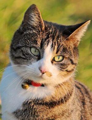 Gato estrés2