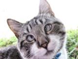 Curiosidades sobre os Gatos