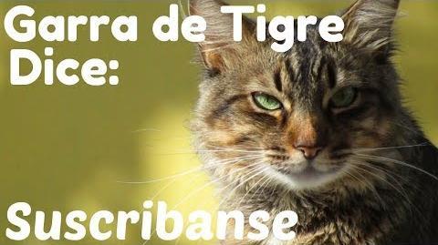 ¿Les gustaría este final para los vídeos con Garra de Tigre? Los Gatos Guerreros