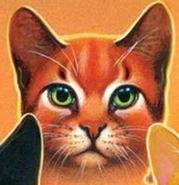 Estrella de Fuego.Cats of the Clans