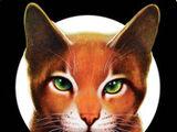 Aplicación de Los Gatos Guerreros