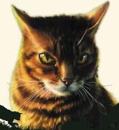 Pequeño Tigre