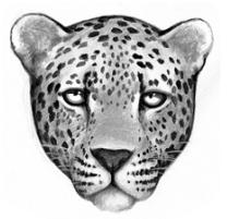 Logo-leopardclan
