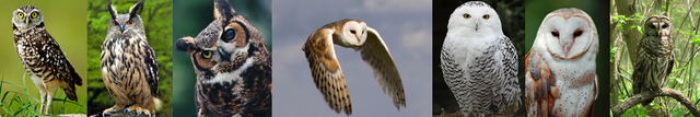 File:Owl heading.png