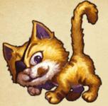 Aze Cat