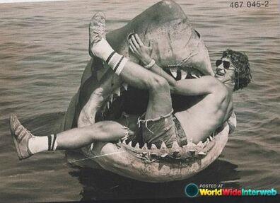 Spielberg Shark