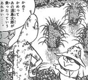 Feridas de nezumi-otoko