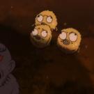 Kijimuna18 Closeup