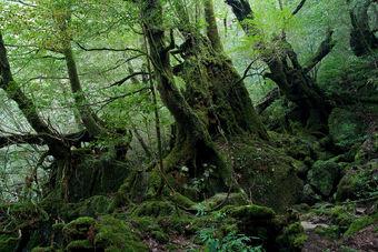 1280px-Shiratani Unsui Gorge 17
