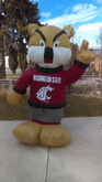 Washington State University WSU Lighted Airblown Inflatable Mascot 8' Foot BUTCH
