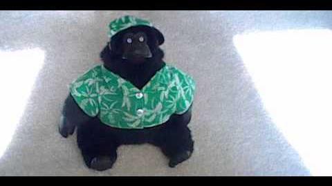 Rocky the rockin' gorilla