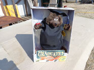 Gemmy singing and dancing graduation bear sings shout