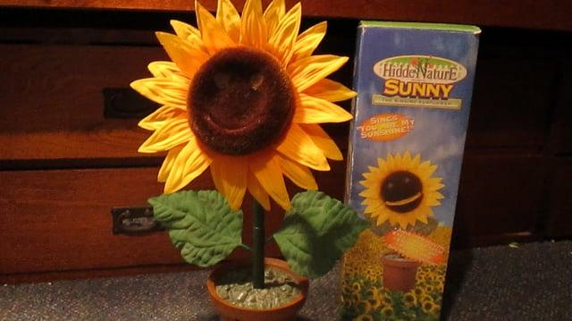 Sunny the Singing Sunflower-0