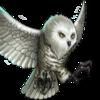 Troop Snowy Owl
