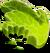 Pet Food Green
