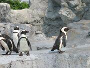Penguin-exclusion